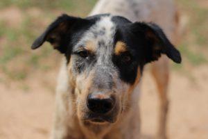 Coyote's Last Romp (Caregiver Story!) 1
